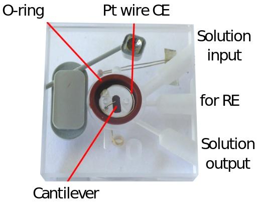 EC-cell2.jpg (44 KB)